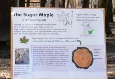 ENJOY OHIO'S MAPLE SEASON