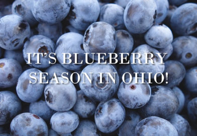 It's Blueberry Season in Ohio